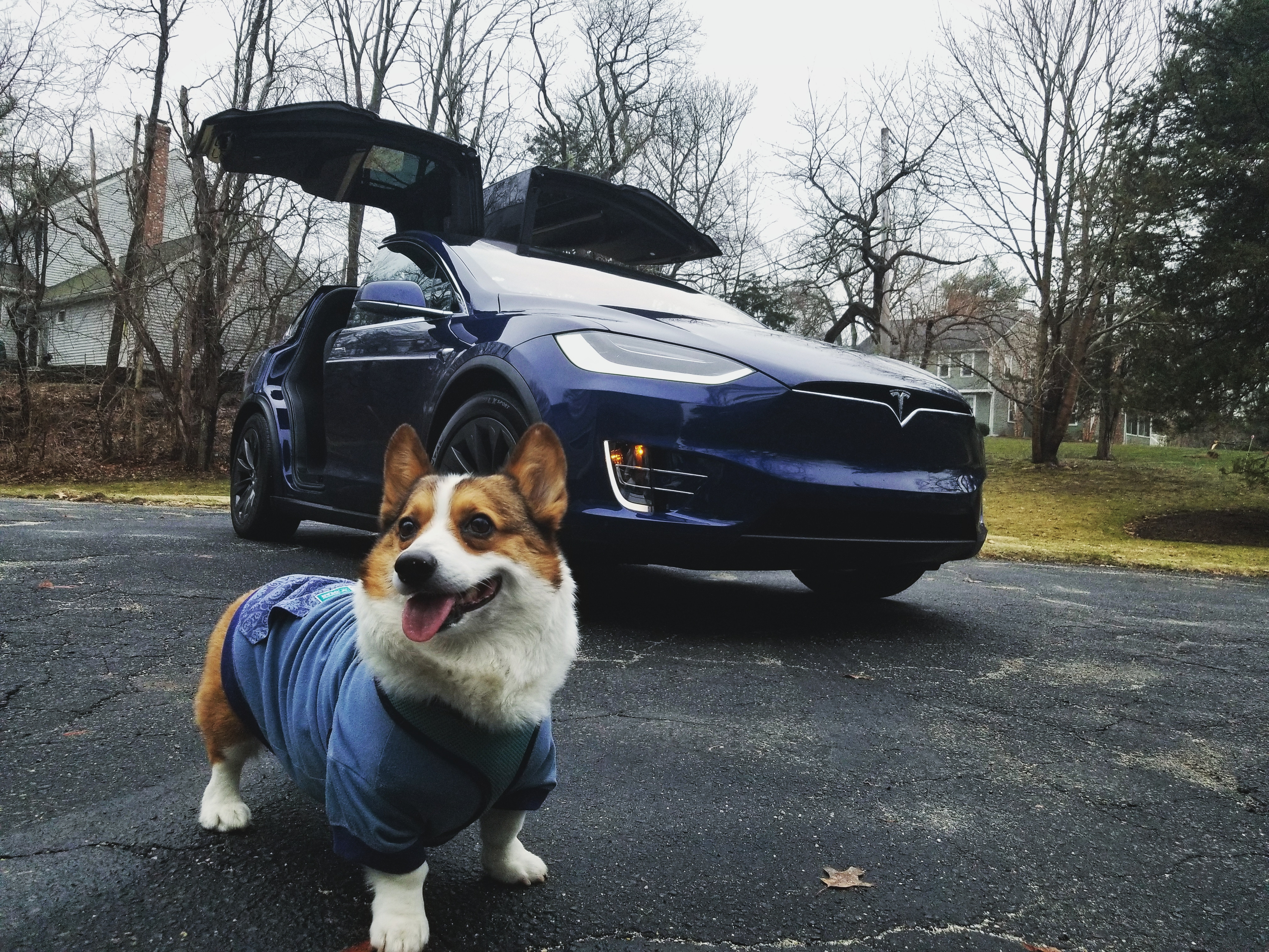 "Owners of the Tesla Model 3 have repeatedly asked Elon Musk to add a so-called ""Dog Mode"" to the car's functionality"